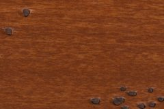 Amber Ale Distressed-4732